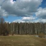 У озера (в лесу под Балашихой)