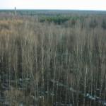 Весенний лес к востоку от Москвы