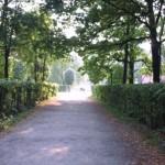 Парковая аллея в Кусково
