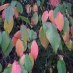 Дерево с разноцветными листьями