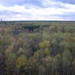 Осенний лес к востоку от Москвы