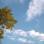 Облако и кусочек дерева