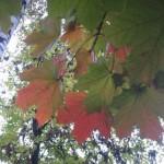 Ствол березы и разноцветные листья