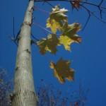 Фрагмент дерева на синем-синем фоне