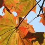 Сентябрь: зонтики