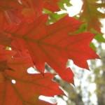 Красный на зеленом