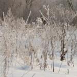 Трава в измороси