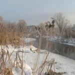 Река, трава и деревья на морозе