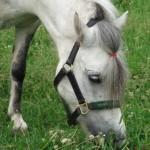 Лошадка щиплет травку