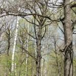 Весенний лесопарк