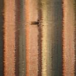 Утка на оранжевой воде
