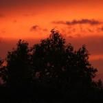 Дерево на красном