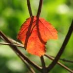 Красный, зеленый, коричневый