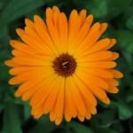 Оранжевый цветок на зеленом