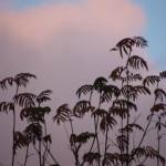 Мытищинские пальмы