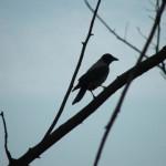 На голой ветке ворон сидит одиноко…