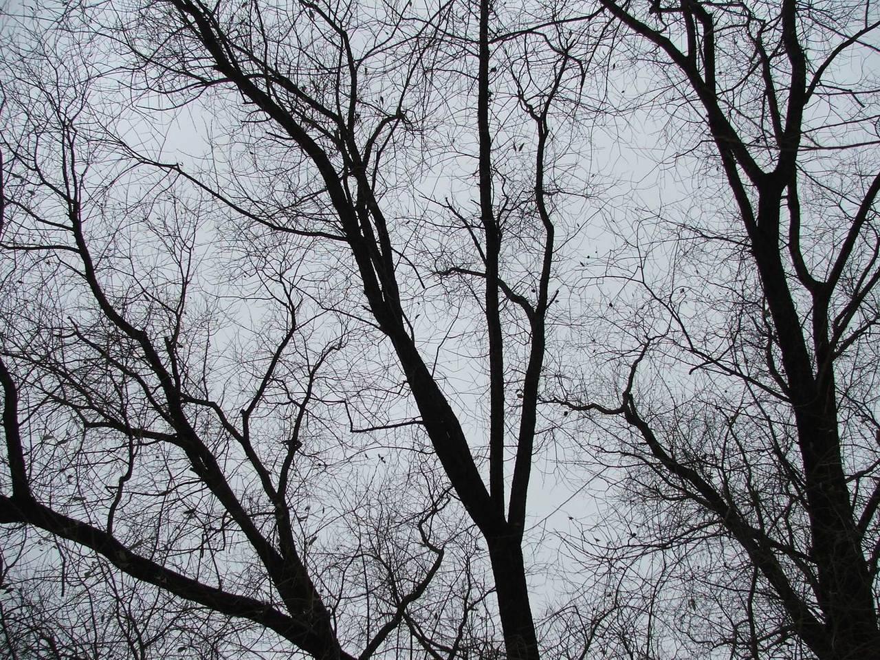 Фото голых деревья 17 фотография
