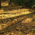 Перспективы осенних теней
