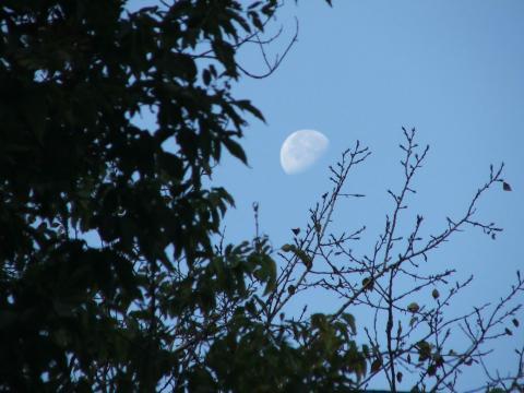 Луна над деревьями