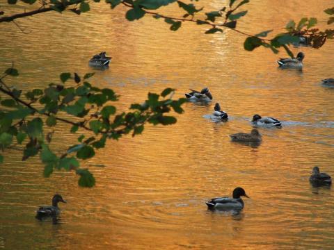 Зеленые листья и оранжевая вода