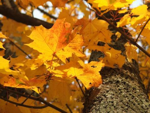 Ствол и листья