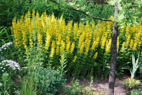 Желтые цветы one more time