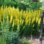 Желтые цветы, one more time