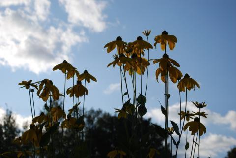 высокие-высокие цветы
