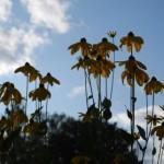 Силуэты улетающих в небо цветов