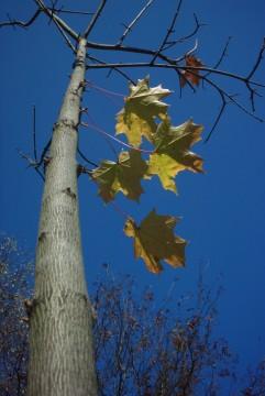 желто-зеленые листья на синем