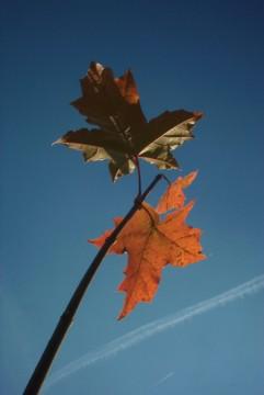 осень. Осень.