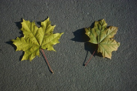 листья на асфальте