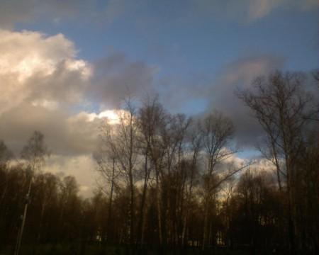 деревья и облака