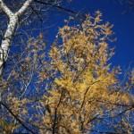 Синее осеннее небо