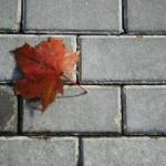 Красный кленовый лист на сером
