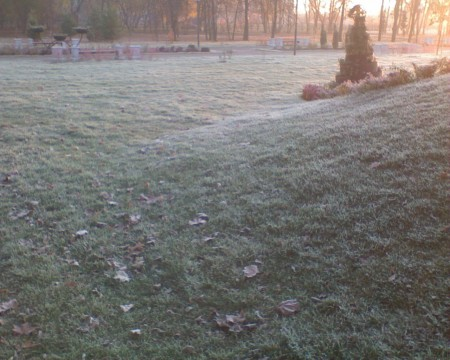 трава изморось утро
