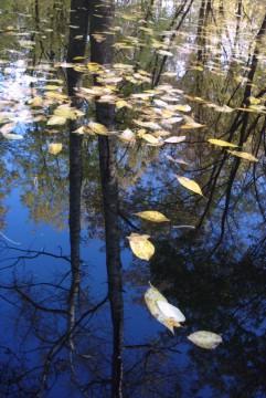 листья падают и плывут