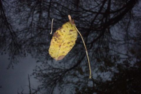 желтый лист на серо-синем