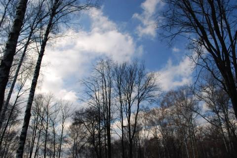 небо в ноябре