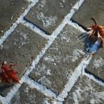 Кленовые листья и первый снежок