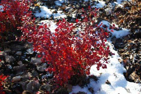 красные листочки
