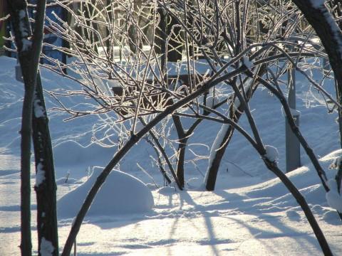 ветки деревьев у фонтана в городском парке