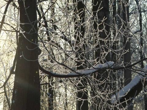 ветки, изморось, снег