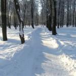 Аллея в снегу