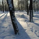 Следы в снегу