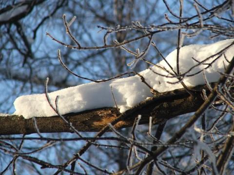Снег на толстой ветке