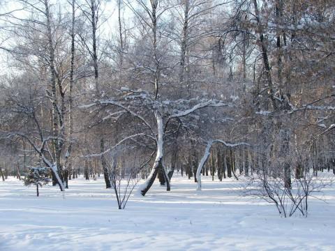 Солнечный день и много снега