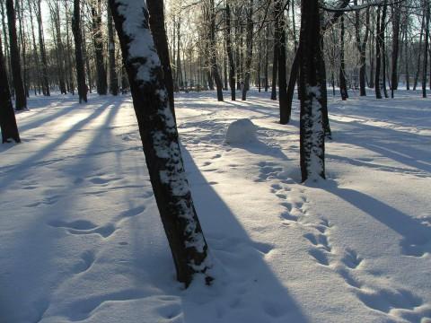 Деревья, снег и тропинки следов