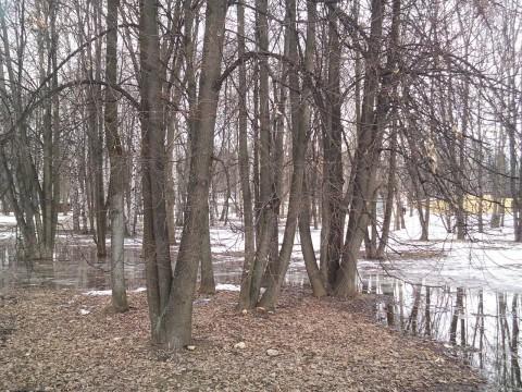 деревья и прошлогодние листья