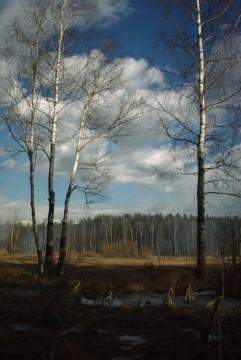 весна в подмосковном лесу